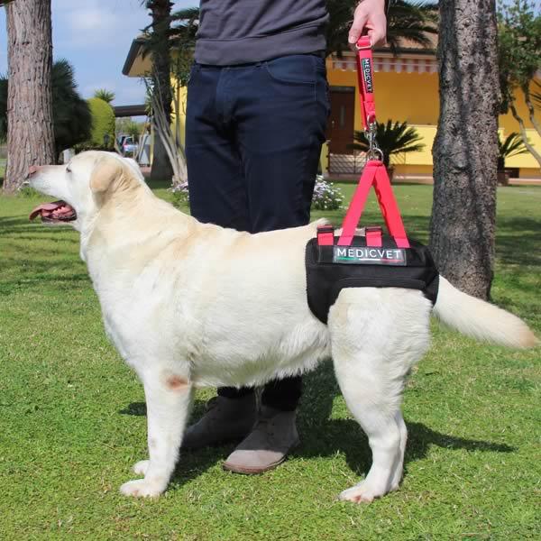 Tutori per cani medicvet for Cane zampe posteriori cedono